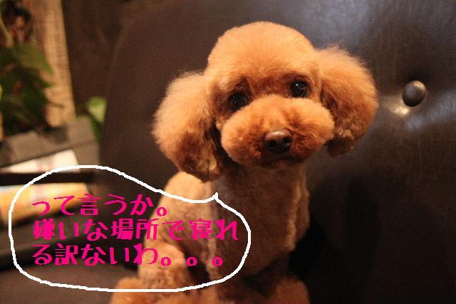 こんばんわぁ~!!_b0130018_229313.jpg