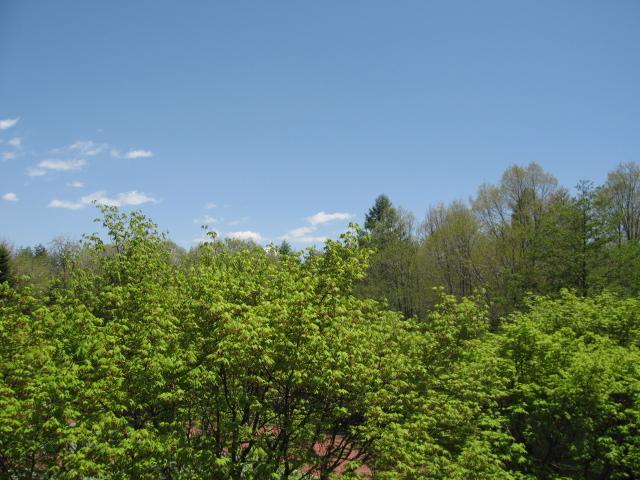 お部屋からの眺め_f0146620_12172094.jpg