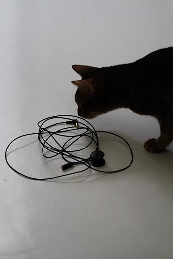 [猫的]ヒモ好き_e0090124_23513042.jpg