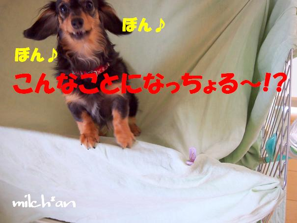 b0115642_22252549.jpg
