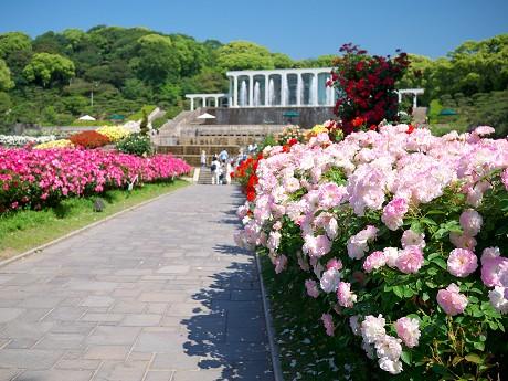 須磨離宮公園のバラ_c0057946_19211612.jpg