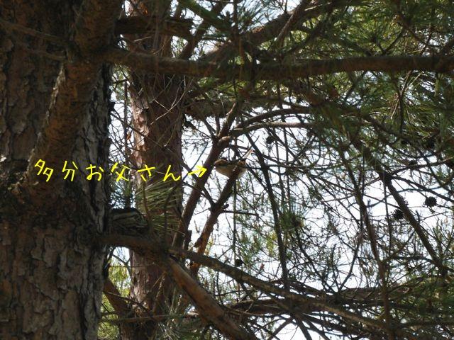 f0177261_16543392.jpg