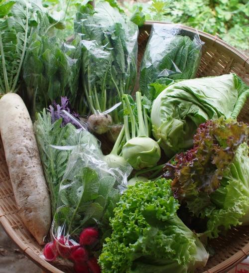 今週の野菜セット(5/28~6/1着)_c0110869_21192286.jpg