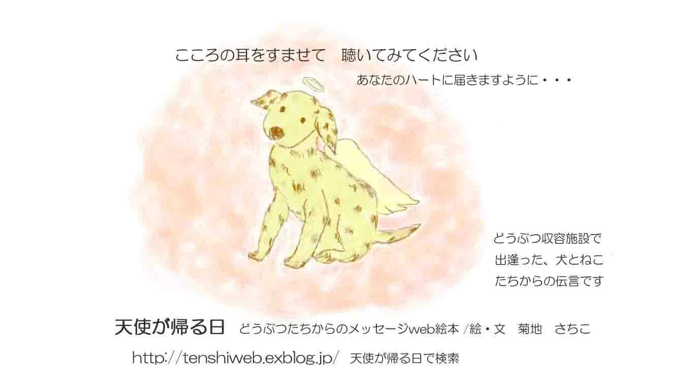 animal angel _f0287381_11164812.jpg