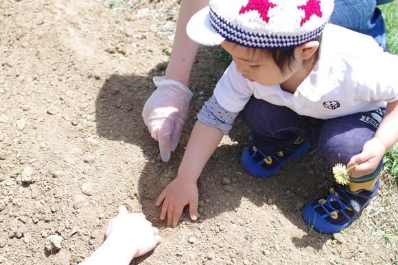 咲かせよう!はるかのひまわり絆プロジェクト開催しました!_e0235911_15465848.jpg