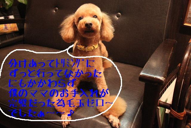 b0130018_17471392.jpg