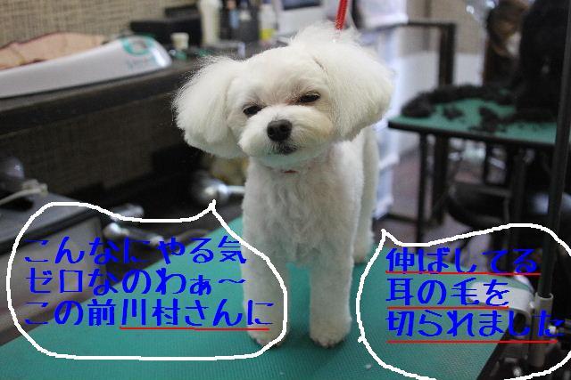 b0130018_17505960.jpg