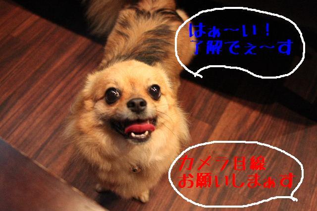b0130018_17535368.jpg