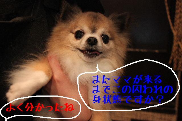 b0130018_1757343.jpg