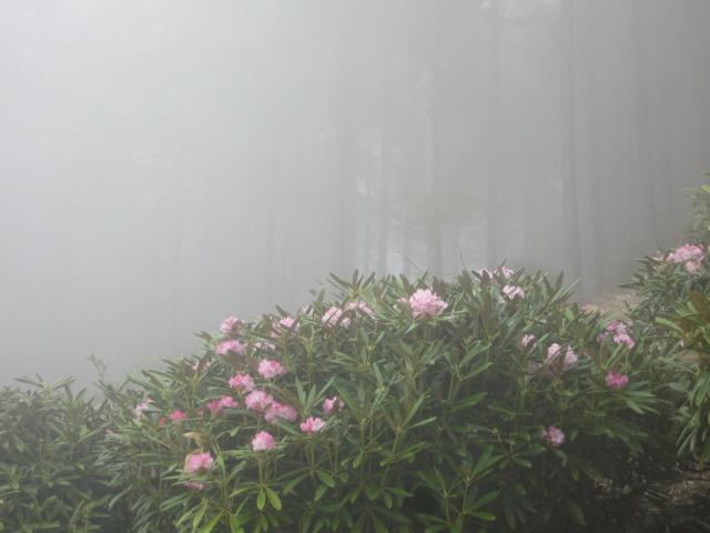 浅間高原の「しゃくなげ園」_f0146620_2395556.jpg