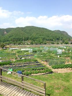 畑のレッスン 5月_e0015023_1232674.jpg