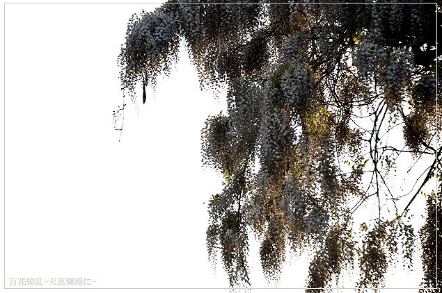 f0235326_715556.jpg