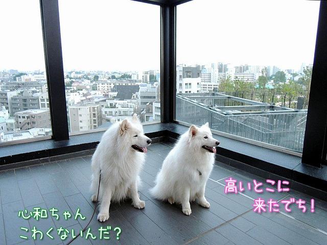 日曜のお散歩・後編_c0062832_751136.jpg