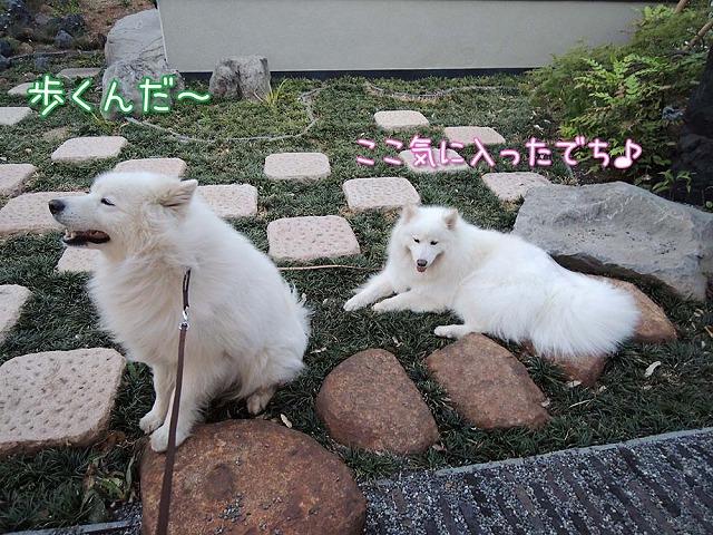 日曜のお散歩・後編_c0062832_751720.jpg