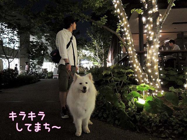 日曜のお散歩・後編_c0062832_754133.jpg