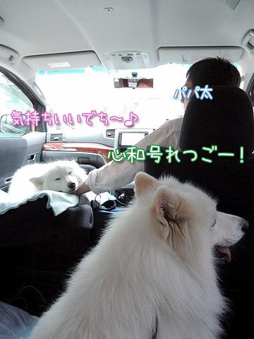 日曜のお散歩・後編_c0062832_762587.jpg