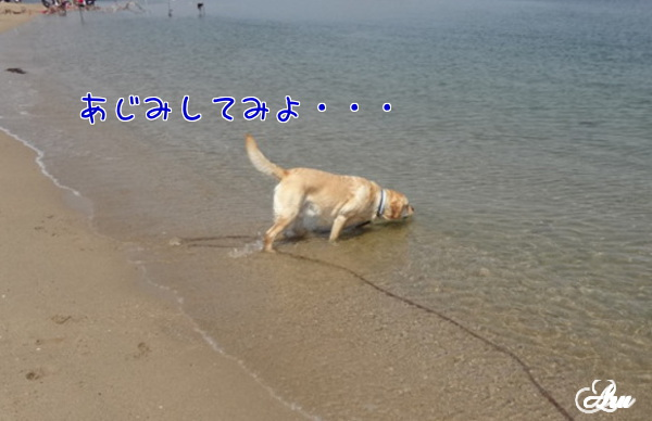 c0301536_16421392.jpg