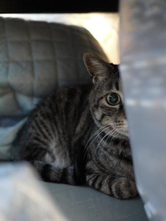 猫のお友だち 浅間くん阿蘇くん編。_a0143140_1283396.jpg