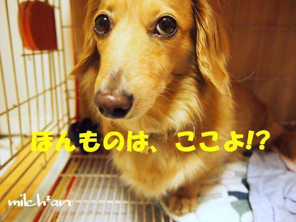 b0115642_22312198.jpg