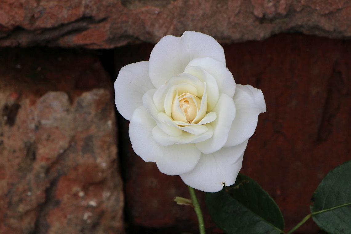 白花×3&シロ_a0107574_21502886.jpg