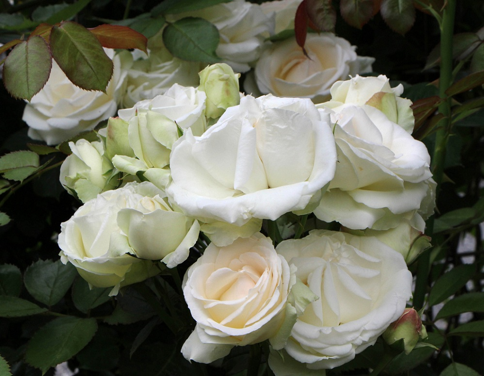 白花×3&シロ_a0107574_21505360.jpg