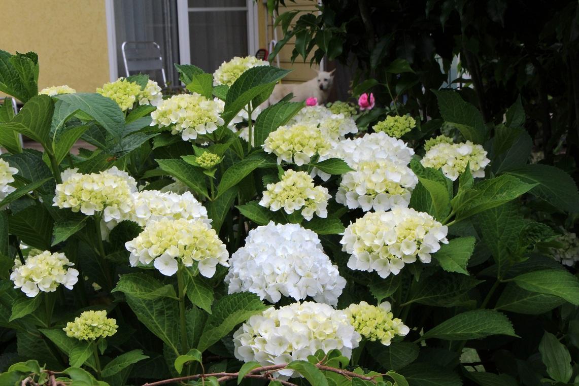 白花×3&シロ_a0107574_21511237.jpg