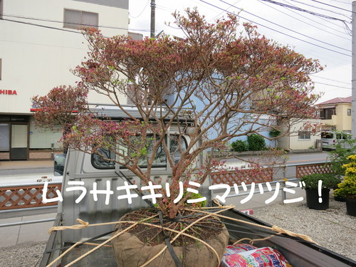 b0200291_22315780.jpg