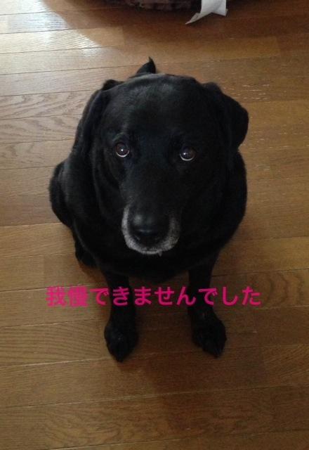 News  /  Anzu!!!!_b0195093_14465537.jpg