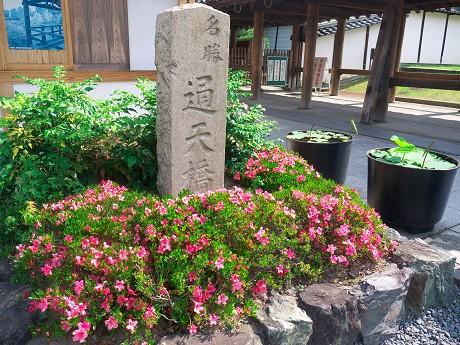 東福寺通天橋_c0057946_2065083.jpg