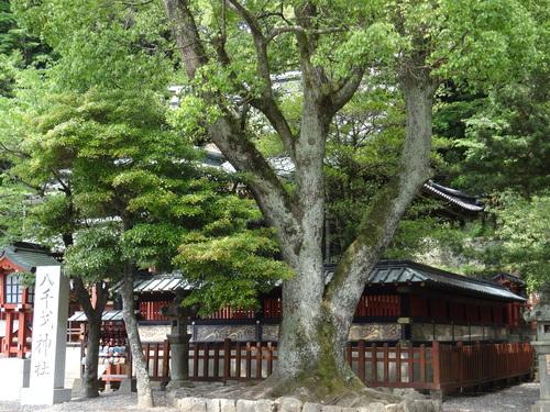 八千矛神社_e0240147_1641589.jpg