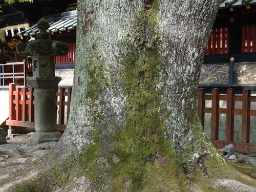 八千矛神社_e0240147_1645773.jpg