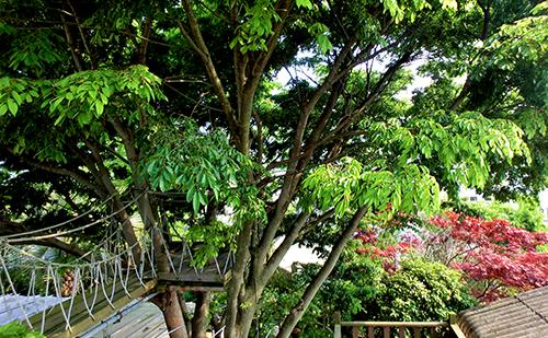 樹の話_a0180552_3395870.jpg