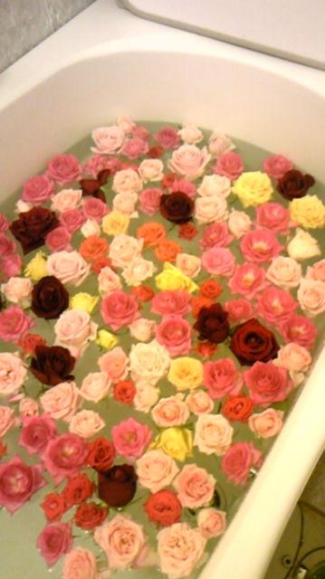 ★閑話休題★「Bloody Rose」ばらもえ_d0155379_23162458.jpg