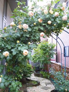 雨の薔薇園2_f0255704_18595317.jpg