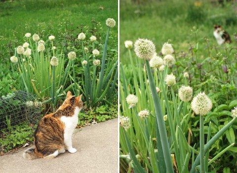 裏庭の花たち(5月下旬)_b0253205_245244.jpg