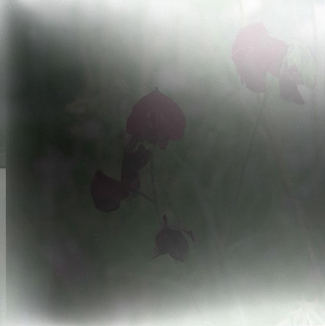c0171206_7551945.jpg