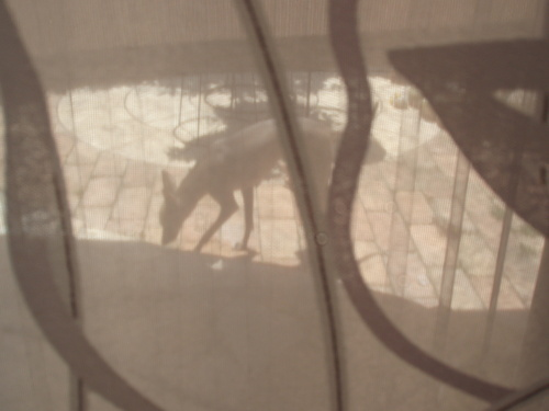シルエット…カーテン越しに_f0249710_22151850.jpg