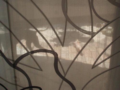 シルエット…カーテン越しに_f0249710_22155615.jpg