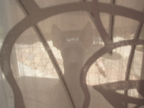 シルエット…カーテン越しに_f0249710_2216183.jpg
