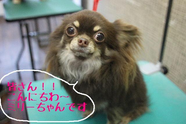 おはよぉ~ございまぁ~す!!_b0130018_0343253.jpg