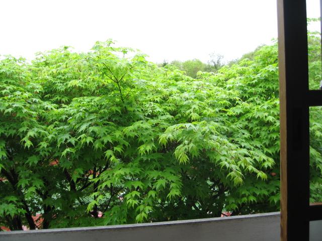雨の日の客室からの眺め♪_f0146620_1743119.jpg