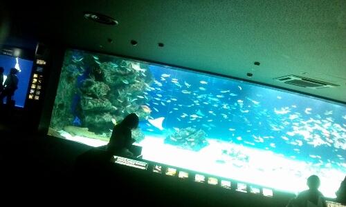 水族館_c0160822_1223447.jpg
