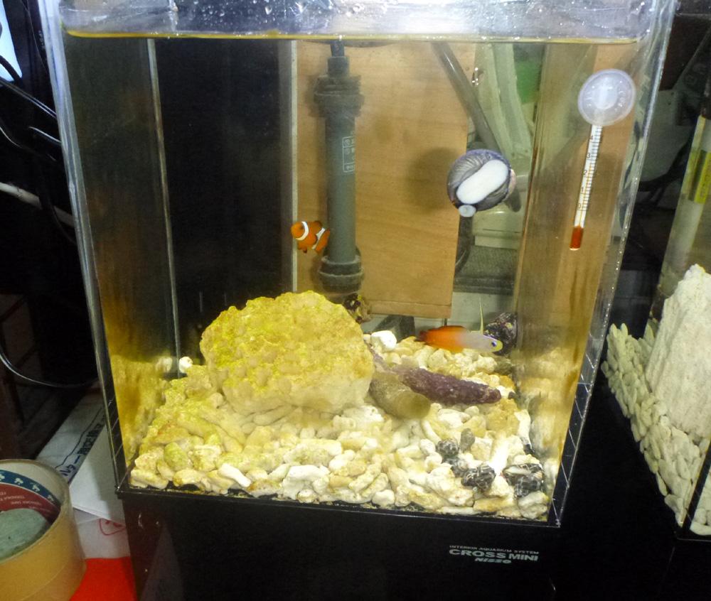 小型観賞魚用水槽、その後の様子。 2013年5月30日(木)_d0171823_22355791.jpg