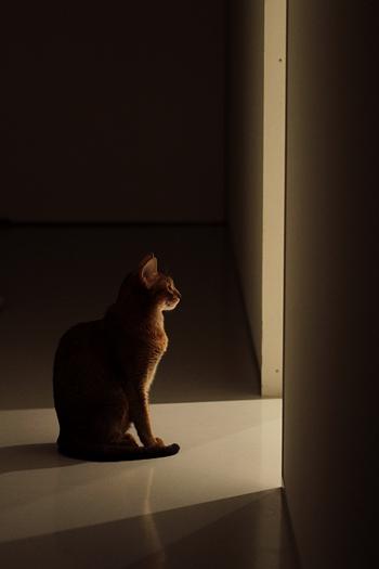 [猫的]深夜_e0090124_2332068.jpg