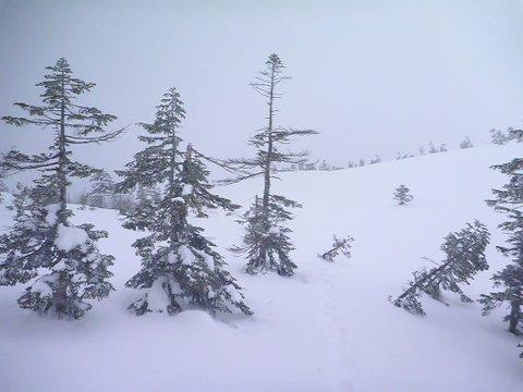 【滑走レポ 2013.4.22】 4月下旬の新雪に道中ドキドキ(笑)@かぐら_e0037849_995626.jpg
