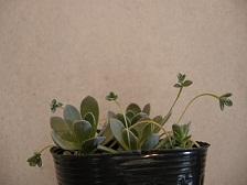 :: 多肉植物、届きました ::_e0204865_16223024.jpg