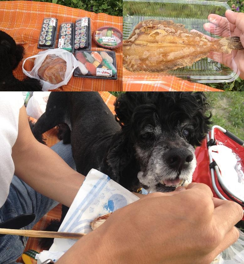 新潟アルバム③~@魚のアメ横 海を見ながら食べるのがオススメ♪~_f0096569_712750.jpg