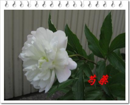 b0149071_164424.jpg