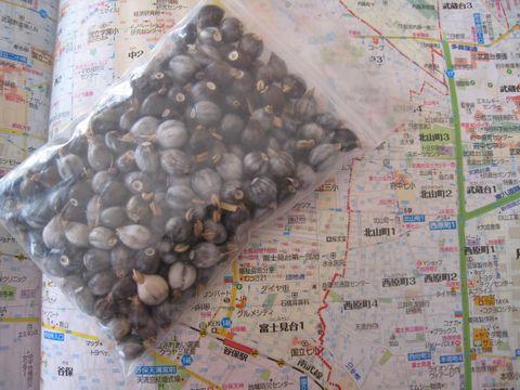 数珠玉獲り_e0170272_10115184.jpg