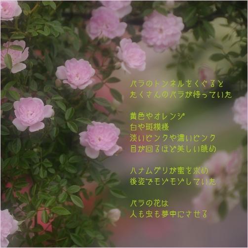 b0154475_021368.jpg
